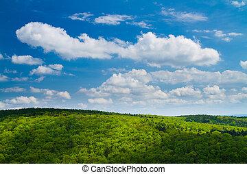 encantador, verde, bosque, azul, cielo