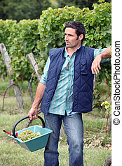 Gardener with a basket full of grapes