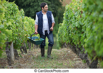 picture of a wine-grower