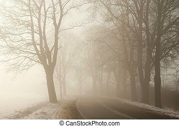 Country road among the trees surrounded by the morning mist....