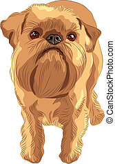 vector sketch red dog Brussels Griffon breed - closeup...