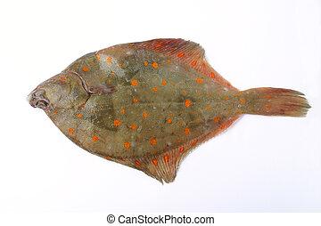 Flat fish