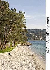 Cabeceira beach on Pontevedra bay - Cabeceira Beach is...