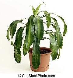 Gabonaszem, berendezés, cserepes növény