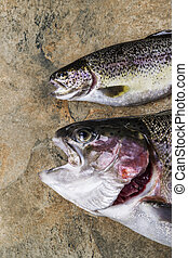 Fresh Trout on Stone - Two fresh rainbow trout on natural...