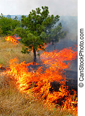 Fire in the woods on a hot summer day. Drought. - Forest...