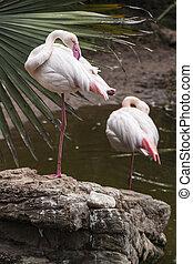Elegant Flamingo - Flamingo bird giving a eloquent pose...