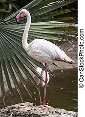 Long neck lady - Image of eloquent flamingo Cango Wildlife...