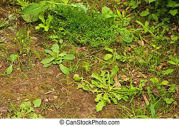 Weeds in a garden path