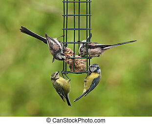 Birds On A Feeder - blue tits and long tailed tits on a...