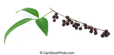 Vitex Negundo or Medicinal Nishinda leaves with fruits