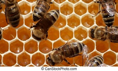 Bees build honeycombs. Material is a wax that they produce...