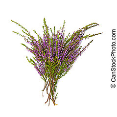 Bouquet of heather  isolated on the white background