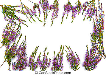 Frame of heather isolated on the white background
