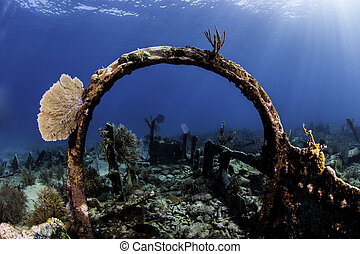 Coral Reefs of North America - Underwater coral reefs in Key...