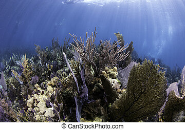 Coral Reefs of North America - Underwater coral reefs of...