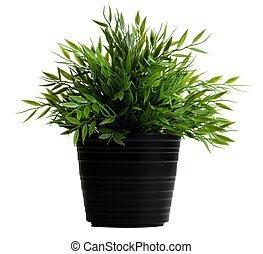 Artificial plant in a black pot on a white background
