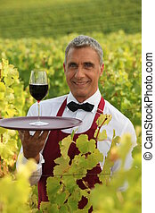 Waiter serving a glass of red wine in a vineyard