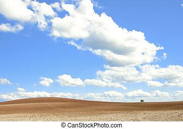the little tree in the fields