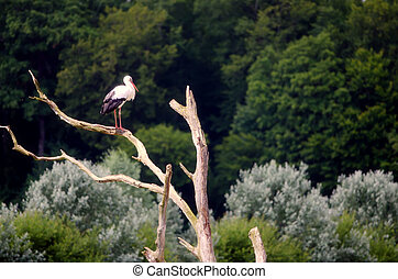 the stork on the branch