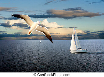 Sail boat and seagull - Sail boats on sea with cloudy sky...