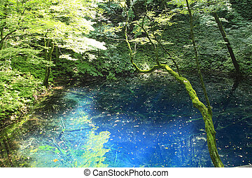 Shirakami-Sanchiworld heritage - Aoike in Shirakami-Sanchi...