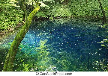 Shirakami-Sanchi(world heritage) - Aoike in Shirakami-Sanchi...