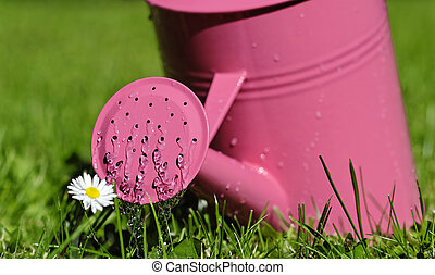 watering can - a pink watering can