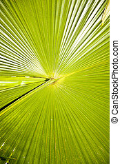 Large green palm leave