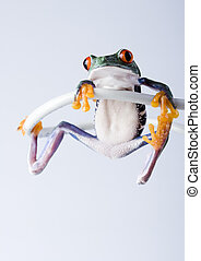 Crazy frog - Frog - small animal with smooth skin and long...