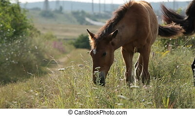 A foal in the field