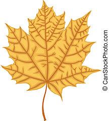 Maple Leaf - Image of autumn brown maple leaf