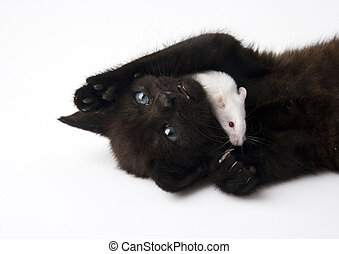 Cat and Mouse - Cat - the small furry animal with four legs...