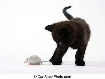 Black cat and White mouse - Cat - the small furry animal...