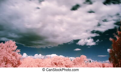 white clouds and pink trees