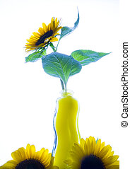 Yellow - The Helianthus genus comprises 67 species and...