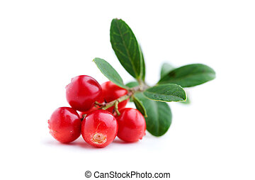 Lingonberries - Fresh lingonberries with some leaves...