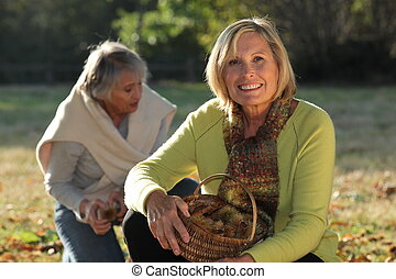 two mature women picking chestnuts