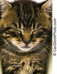 Cat - the small furry animal with four legs and a tail;...