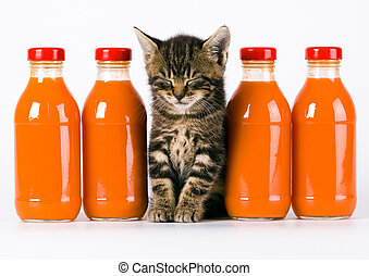 Cat and Orange drink - Cat - the small furry animal with...
