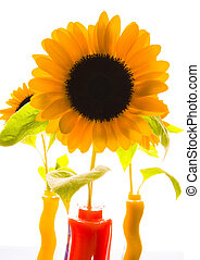 Helianthus - The Helianthus genus comprises 67 species and...