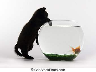 Black cat and Gold fish - Cat - the small furry animal with...