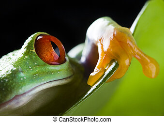 Green frog - Frog - small animal with smooth skin and long...