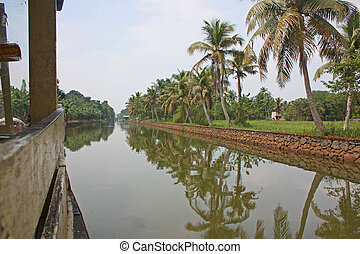 Palms with reflections in Kerala, India