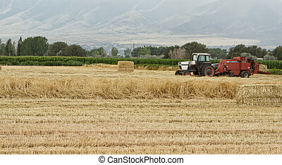 A tractor harvesting wheat