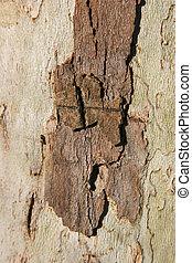 árbol, tronco