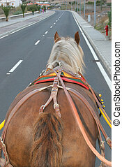 horse walking on a road