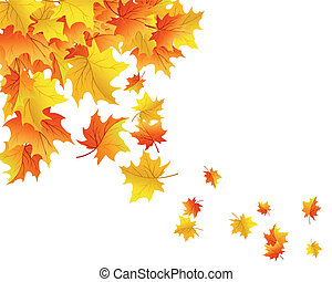 Autumn background - Autumn maples falling leaves background...