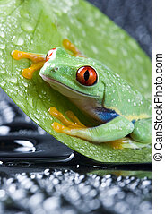 Frog - small animal with smooth skin and long legs that are...