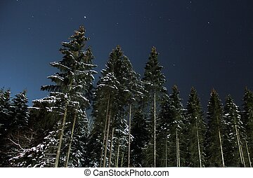 winter forest at night